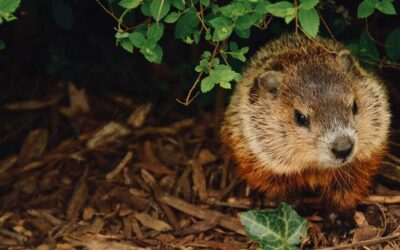 Groundhog Day Exclusive: Flurry of Partnership Tax Audit Regs